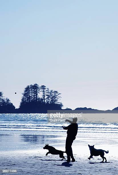 man playing with dogs on beach