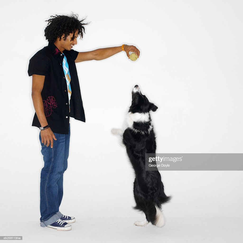 man playing with his shepherd dog : Stock Photo