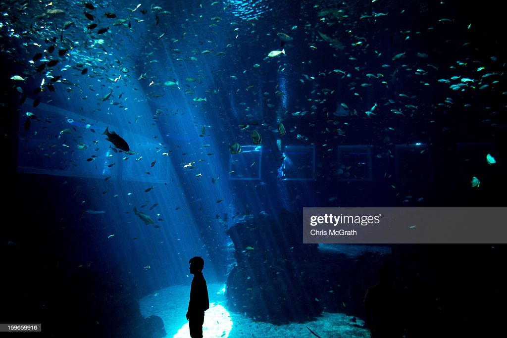 A man poses for a photograph in front of a large aquarium at Resort World Sentosa's Marine Life Park, January 18, 2013 in Singapore. The Marina Life Park is Resort World Sentosa's newest attraction and is the world's largest aquarium, with 100,000 marine animals of over 800 species housed in 45 million litres of water.