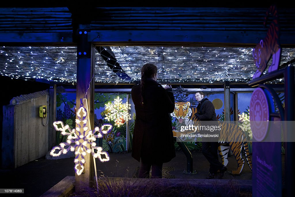 A man poses with a tiger cutout at the Smithsonian's National Zoo December 29, 2010 in Washington, DC. The National Zoo decorated its main walk with holiday lights and other decorations for its yearly Zoo Lights celebration.