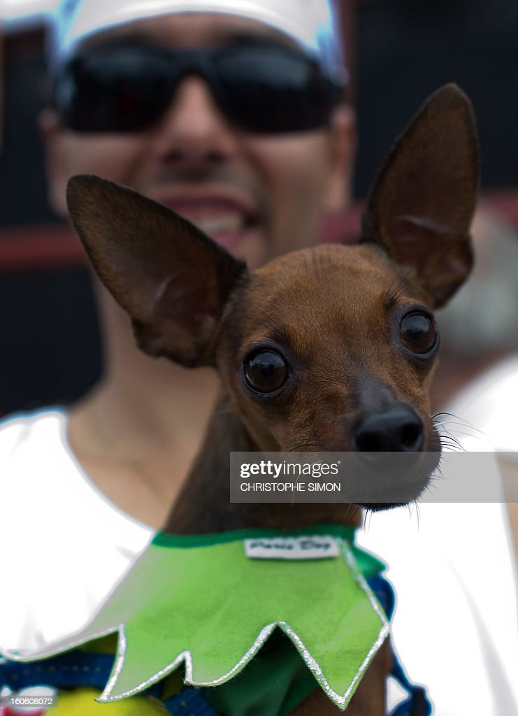 A man poses with his fancy dressed dog during the animals' carnival, in Copacabana beach in Rio de Janeiro on February 03, 2013.