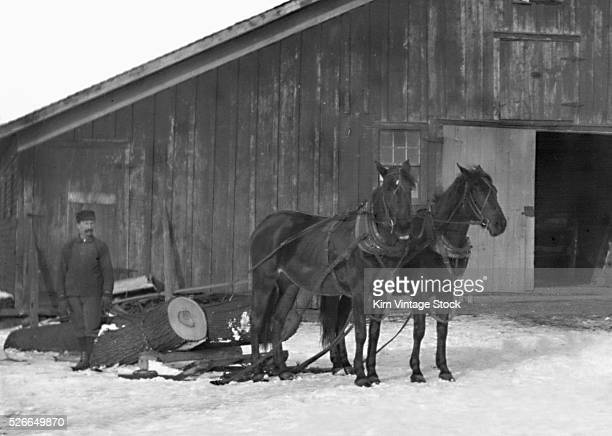 A man poses with his team of horse used for logging in New York State