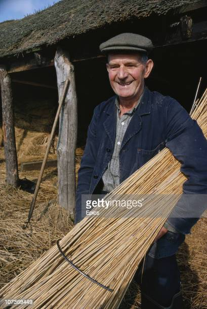 A man poses with reeds that he has collected for the use in thatched roofs in the rural village of Ranworth Norfolk March 1970 Thatching is big...