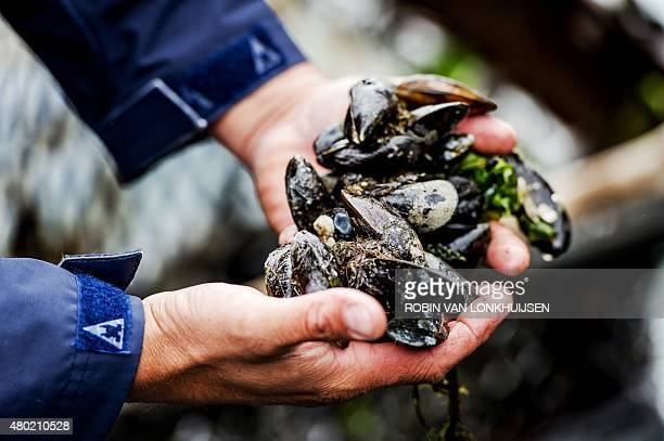 OUT*** A man presents the first catch of mussels of the year from the Oosterschelde in Yerseke on July 8 marking the start of the musselsseason AFP...
