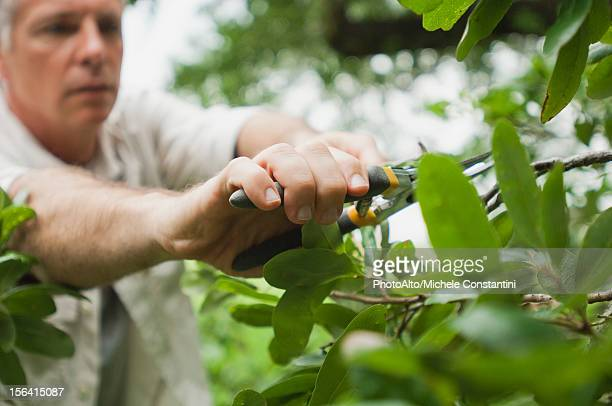 Man pruning branches