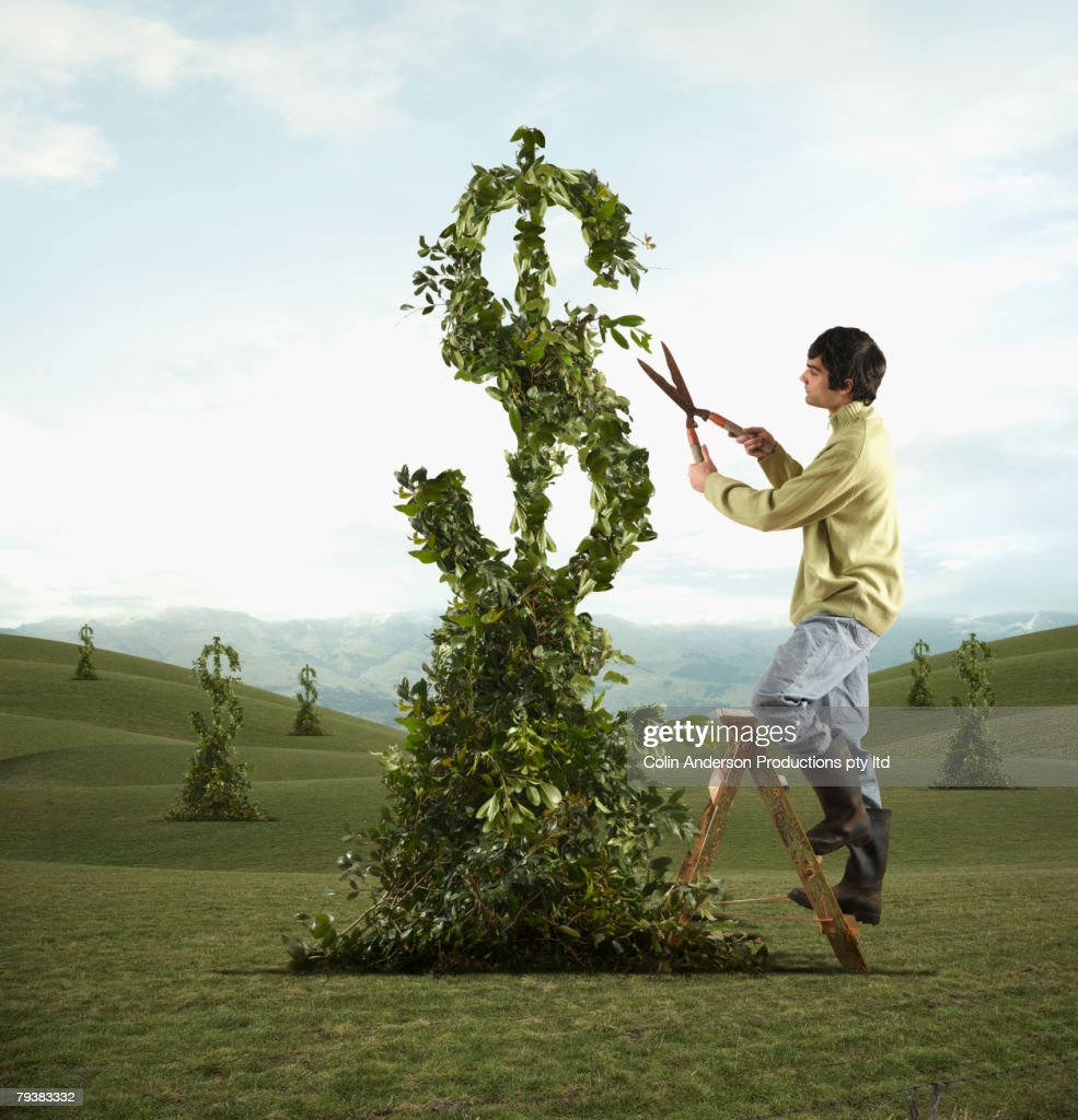 Man pruning dollar sign tree : Stock Photo