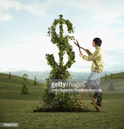 Man pruning dollar sign tree : Foto de stock