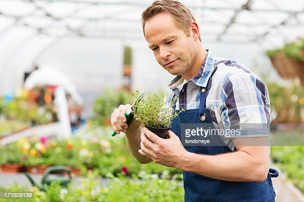 Man Pruning Small Potted Plant