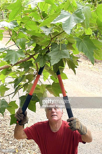 Man pruning tree with shears