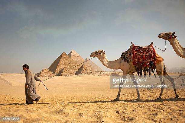 Man pulling camels in front of the pyramids of Giza, Egypt