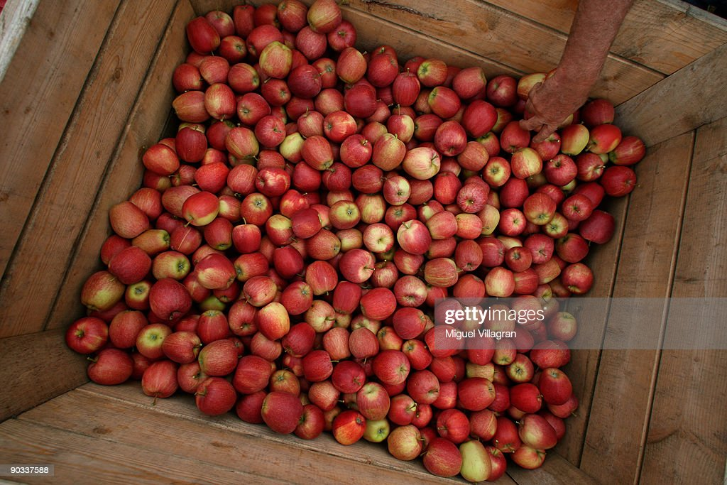 A man puts a 'Gala' apple into a wodden box during the apple harvest next to the lake Constance on September 4, 2009 in Lindau, Germany. The lake is situated in Germany, Switzerland and Austria near the Alps. More then 1500 farmers grow apples in the lake Constance area.