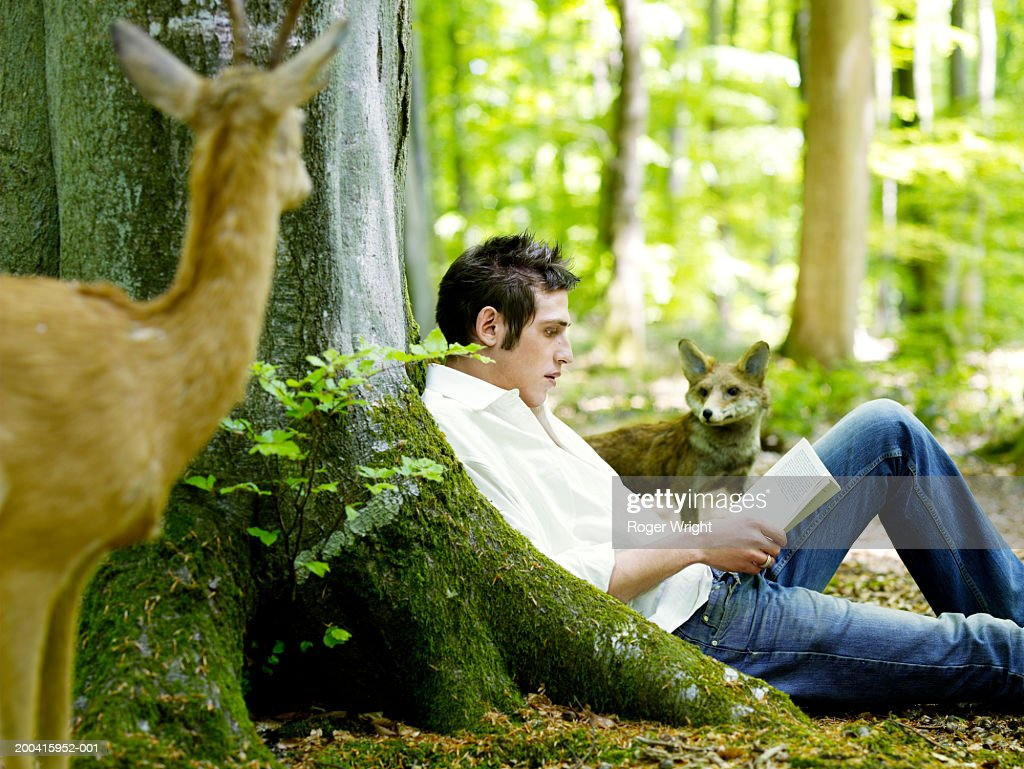 Man reading in beech forest (Fagus sp.) by stuffed deer and fox