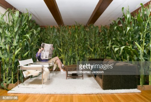 Man reading paper in room with corn : ストックフォト