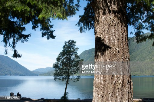 Man relaxes next to Lake Cushman with Douglas fir tree in foreground, Olympic National Park, Washington State : Stock Photo