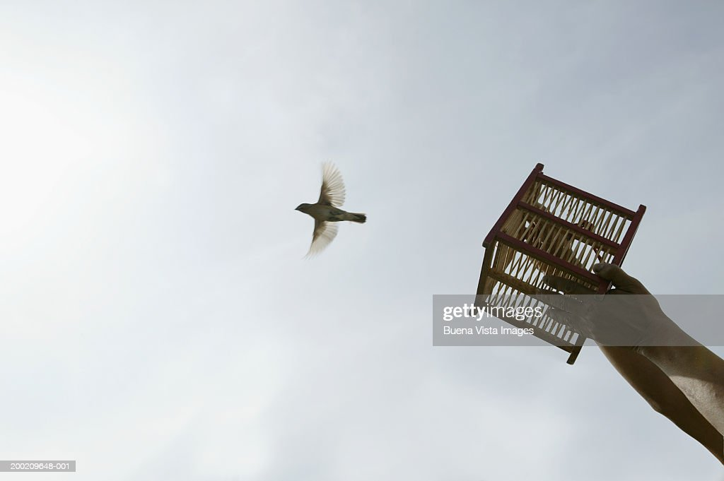 Man releasing bird from small cage, low angle view