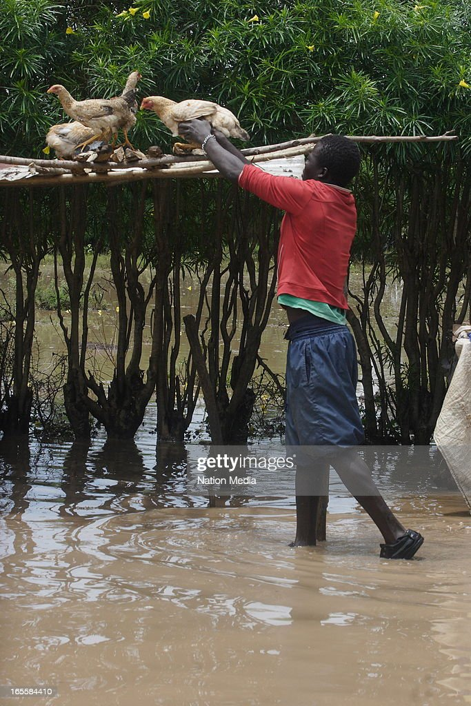 A man rescues his chickens after the floods on April 1, 2013 in Kisumu County, Kenya. Thousands of people have been displaced by the heavy rains with houses destroyed and livestock lost. At least 10 people have reportedly been killed by the floods.