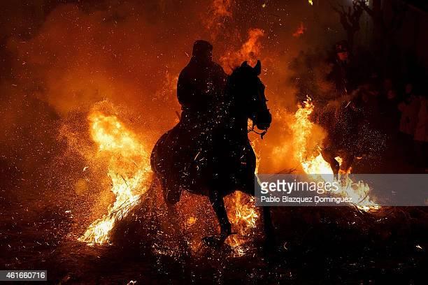 A man rides a horse through a bonfire during 'Las Luminarias' Festival on January 16 2015 in San Bartolome de Pinares Spain In honor of Saint Antony...