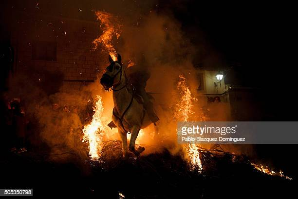 A man rides a horse through a bonfire during 'Las Luminarias' Festival on January 16 2016 in San Bartolome de Pinares Spain In honor of Saint Antony...
