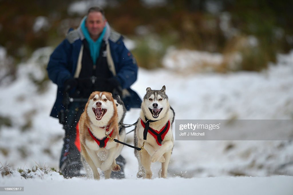 A man rides a sled pulled by huskies in a forest courses during practice for the Aviemore Sled Dog Rally on January 23, 2013 in Feshiebridge, Scotland. Huskies and sledders prepare ahead of the Siberian Husky Club of Great Britain 30th anniversary race taking place this weekend near Aviemore.