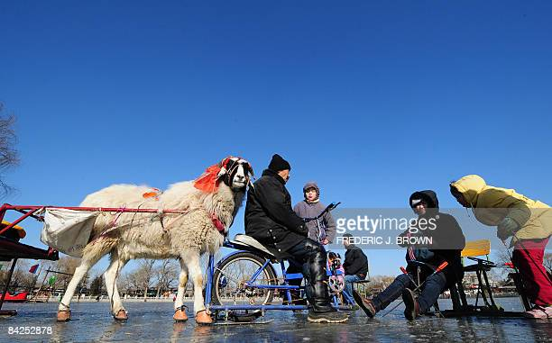 A man riding a bicycle on a frozen lake leads his goatpulled carriage to attract customers for a ride as people play on a frozen lake in Beijing on...