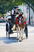 Man riding a horse cart, Savannah, Georgia, USA