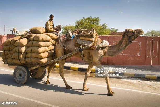 Man riding on a camel drawn cart along a road, Bikaner, Rajasthan, India