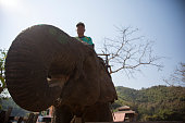 Man riding on elephant, low angle view, close-up, Thailand