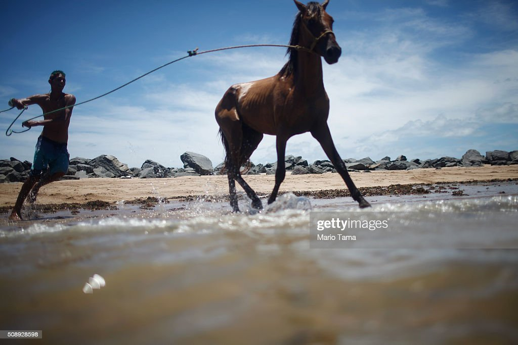 A man runs with a horse on the beach on February 7, 2016 in Olinda, Pernambuco state, Brazil. Pernambuco state is the state that has seen the most cases of microcephaly in Brazil, a condition which has been tangentially linked to the Zika virus.