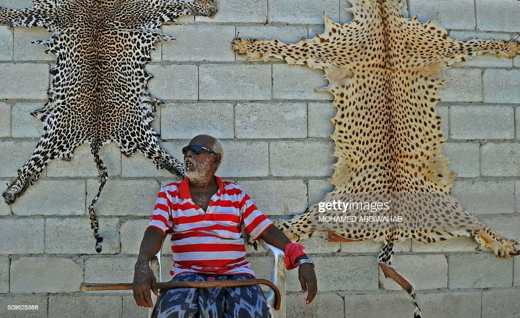 A man sells leopard skins near Mogadishu airport on February 11, 2016. Leopards are an endangered animal in Somalia. / AFP / MOHAMED ABDIWAHAB