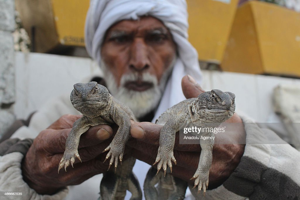 A man sells Sanda Lizard oil on February 3, 2014 in Islamabad, Pakistan. Oils extracted from the spiny-tailed lizard are believed to cure various ailments including muscular and joint pain. The spiny-tail lizard is hunted on a large scale in Khyber Pakhtunkhwa, Punjab and Sindh. The fat of the body is boiled down and the resulting oil. A sanda produces almost 15 tea spoons of oil, which is extracted from the fat of the body. The oil prepared from the fat is used for message on the body parts. In Pakistan not many people have health facilities so they depend on such things and many people use these kinds of medicines to cure their diseases. Medical experts say that there is no reality in the benefits of the oil of spiny-tail lizard since its fats are no different from that of any other reptile or animal.