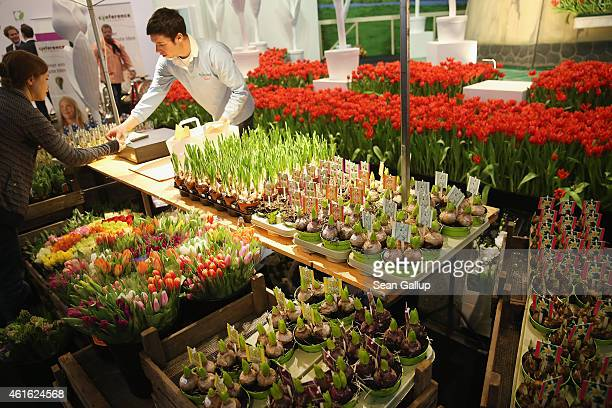 A man sells tulips and bulbs from Holland at the International Green Week agricultural trade fair on January 16 2015 in Berlin Germany The...