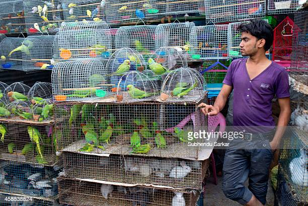 A man sells various species of birds at Sonepur fair ground The Sonepur Cattle Fair is the largest cattle fair in Asia and begins every year on the...