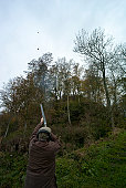 Man shooting grouse, Berwickshire, Scotland