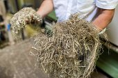 A man shows hemp fibres at the Interval company facilities in ArcLesGray near Dijon central eastern France on July 12 2016 Faurecia and Interval...