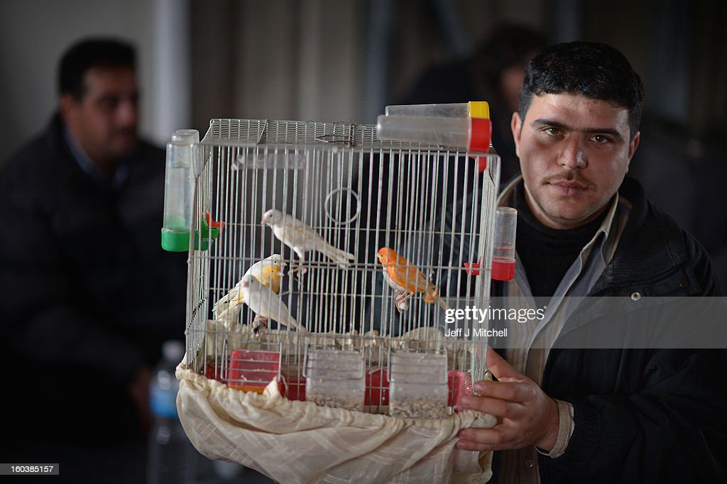 ZA'ATARI, JORDAN - JANUARY 30: A man shows off his pet birds as new Syrian refugees arrive at the International Organization for Migration at the Za'atari refugee camp on January 30, 2013 in Mafrq, Jordan. Record numbers of refugees are fleeing the violence and bombings in Syria to cross the borders to safety in northern Jordan and overwhelming the Za'atari camp. The Jordanian government are appealing for help with the influx of refugees as they struggle to cope with the sheer numbers arriving in the country.