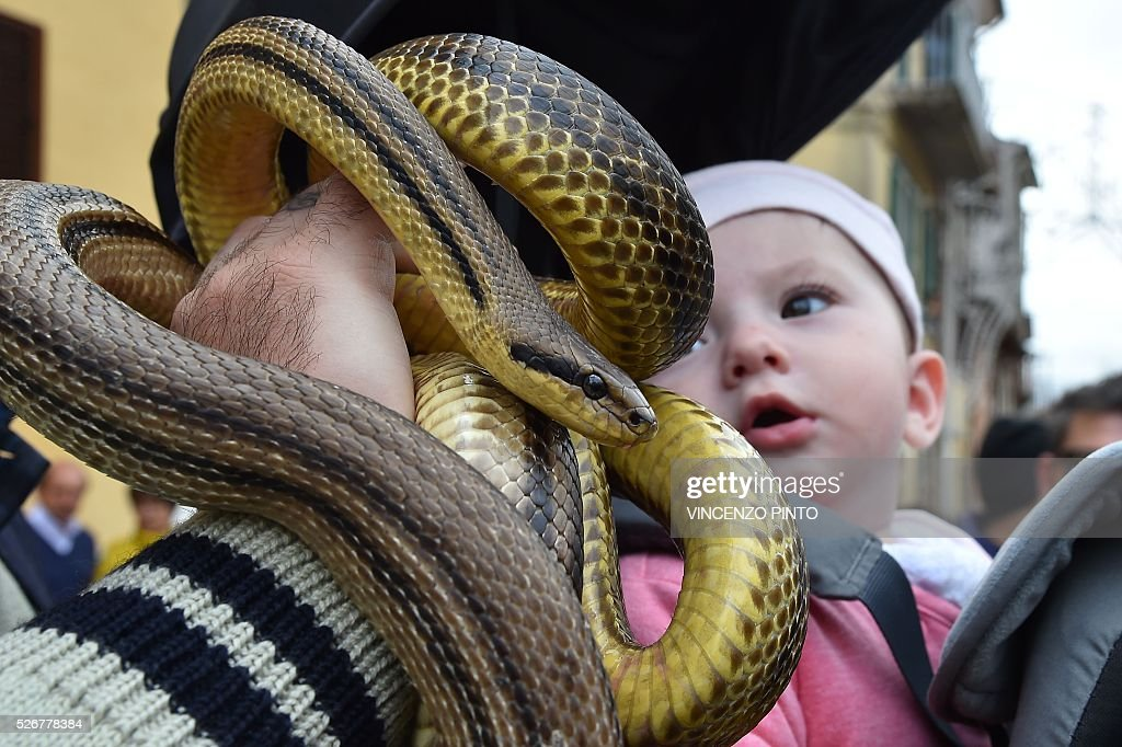 A man shows snakes as a baby looks on before the annual procession of faithful carrying a statue of Saint Domenico covered with live snakes in the streets of Cocullo, a small village in the Abruzzo region, on May 1, 2016.