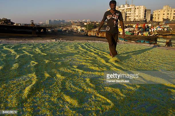 A man sifts through wet finely chopped plastic with his feet as it dries in the sun on a rooftop in the Dharavi slum on February 3 2009 in Mumbai...