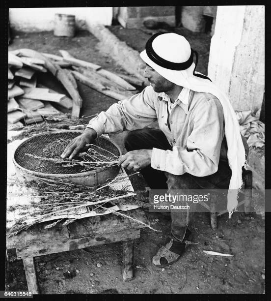 A man sits by a large bowl performing the preliminary preparations of hashish After the hemp plant has been picked it is stored and dried The dope...