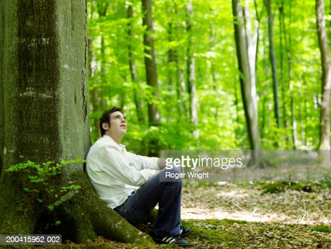 Man sitting in beech forest(Fagus sp.), looking up : Foto stock