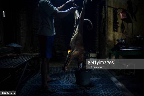 A man skins a dog during the slaughter process at a dog meat butchery house on July 25 2017 in Yogyakarta Indonesia Indonesians have seen a...