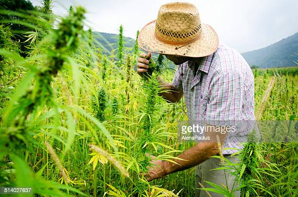 Man smelling medical marijuana