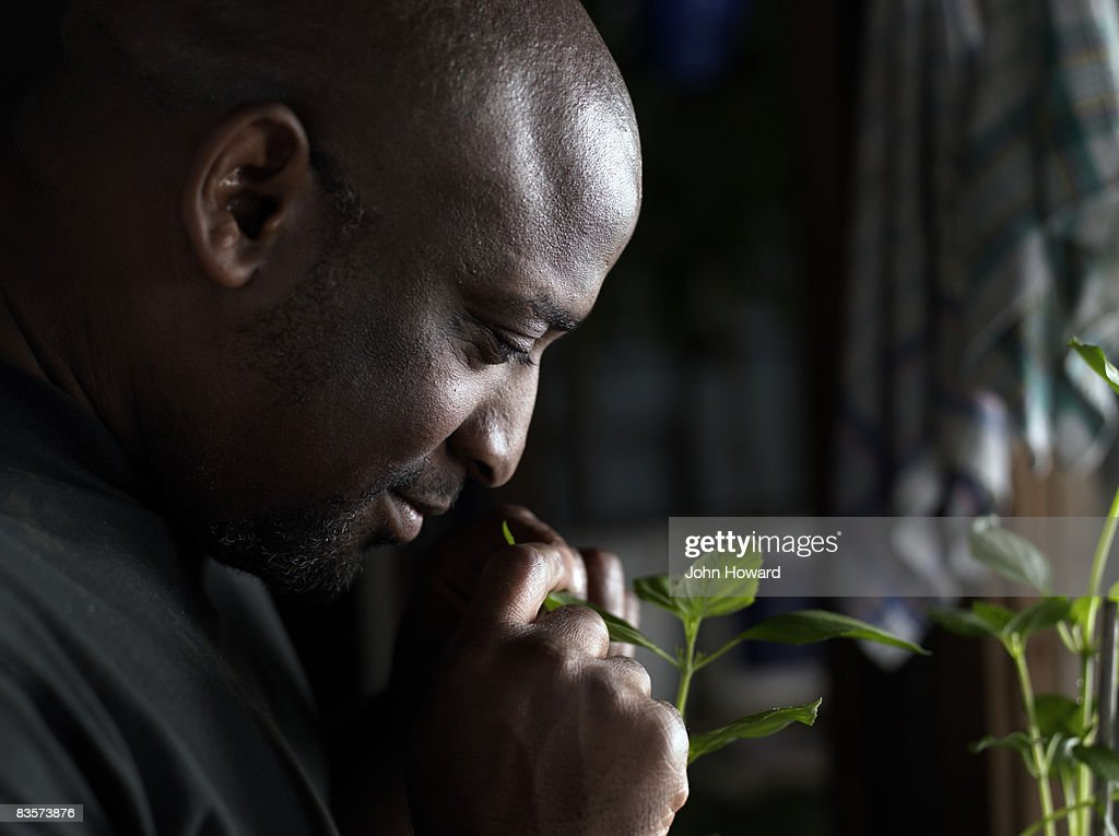 Man smelling saplings in garden shed : Stock Photo