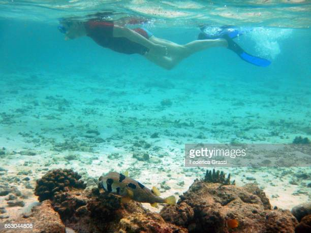 Man Snorkeling with a Diodon Liturosus (Black blotched porcupinefish)