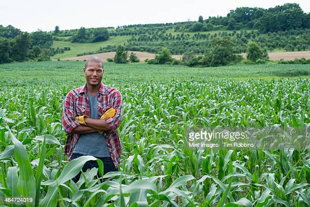A man standing in a field of corn,on an organic farm.