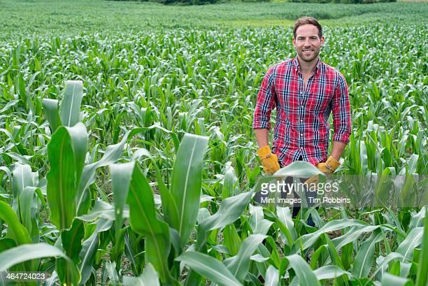 A man standing in a field of corn,on an organic farm.