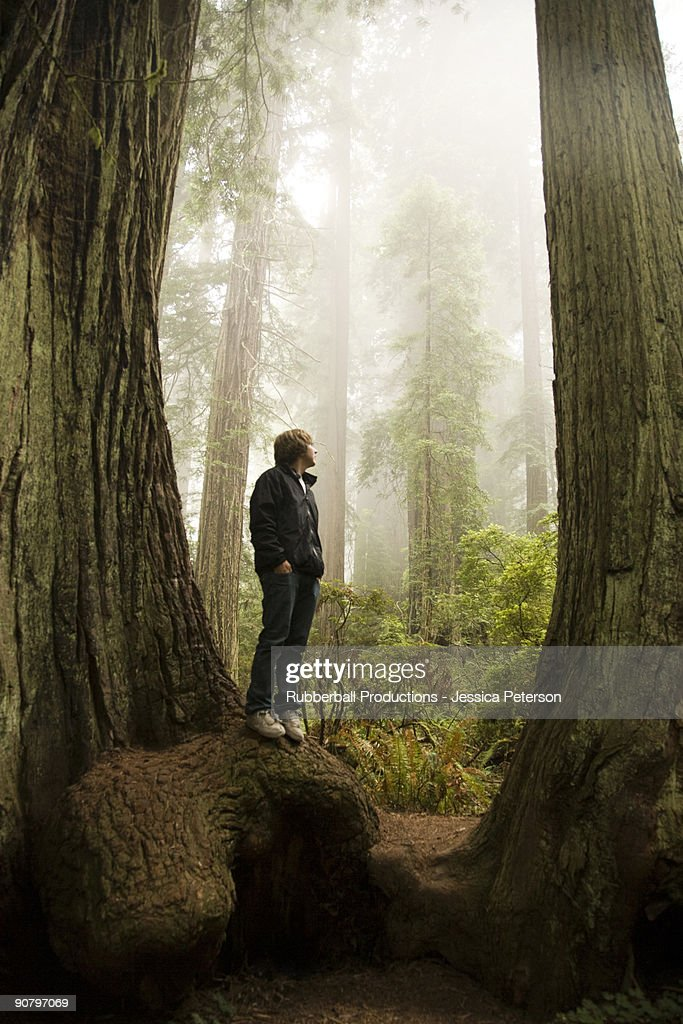 man standing in between two giant redwoods in the forest