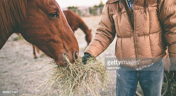 Man stands in pasture and feeds horse hay from hand