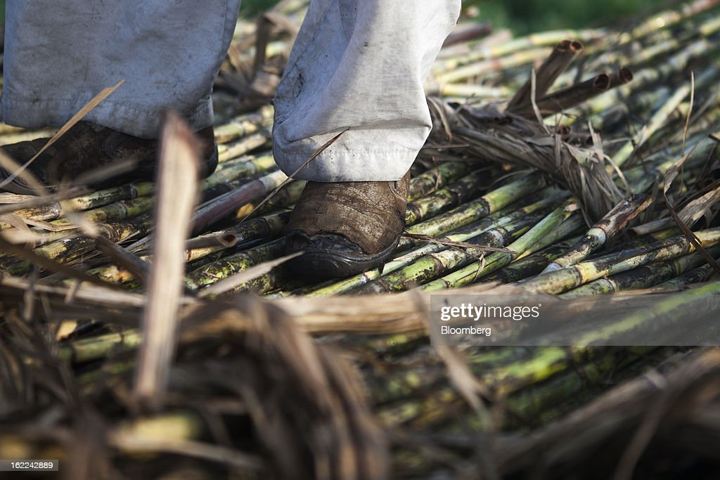 A man stands on stalks of harvested sugarcane in a field in the outskirts of Modinagar, Uttar Pradesh, India, on Tuesday, Feb. 19, 2013. Mills in Uttar Pradesh state, set to be India's largest sugar producer in 2012-2013, may continue cane crushing until April 30, Uttar Pradesh Sugar Mills Association President C.B. Patodia said in a phone interview. Photographer: Prashanth Vishwanathan/Bloomberg via Getty Images