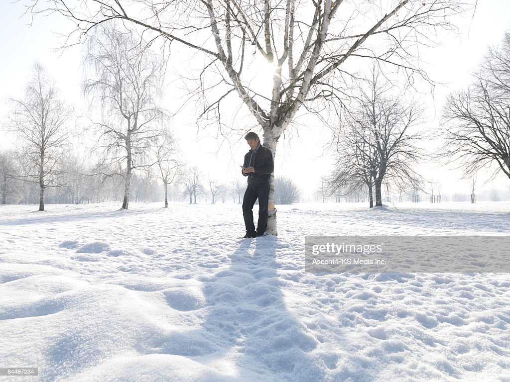 Man stands under birch tree, text messaging : Stock Photo