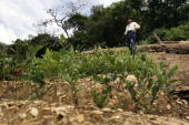 A man stands with his coca plants December 21 2005 in the town of Coroico in the Yungas Bolivia Evo Morales the newly elected Bolivian president and...